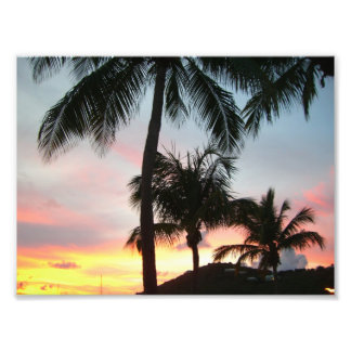 Sunset Palms Photo