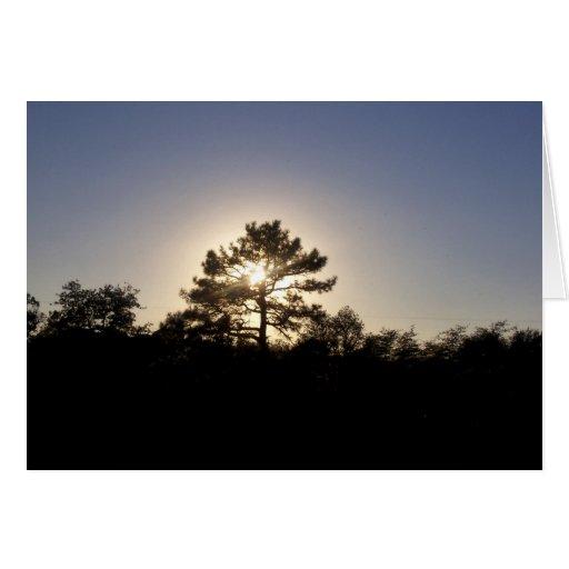Sunset Pine 2 Card