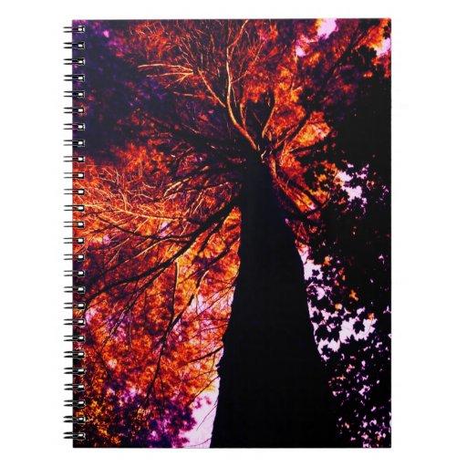 sunset pine notebook