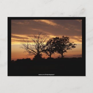 Sunset - Postcard postcard