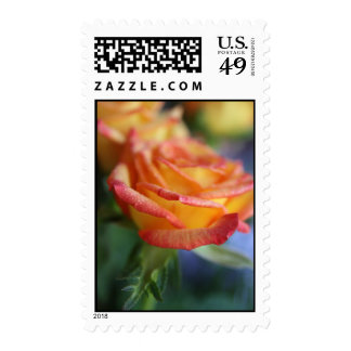 Sunset Rose 2 Postage Stamps