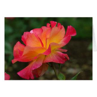 Sunset Rose Card