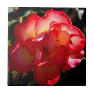 Sunset Rose Tile
