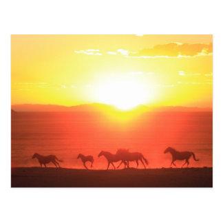 Sunset Run Postcard