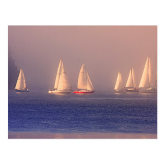 Sunset Sailboats Photo Postcard