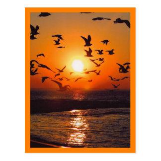 Sunset Scene Orange Border Postcards