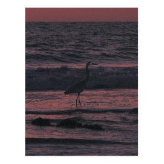 Sunset sea bird postcard