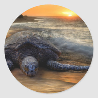 Sunset Sea Turtle Sticker
