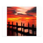 sunset, seagulls, fort, myers, florida, nature