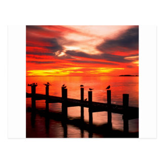 Sunset Seagulls At Fort Myers Florida Postcard