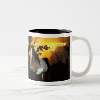 Sunset Stallion Mug