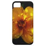 Sunset Stella iPhone 5 Cases