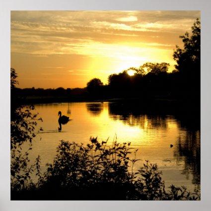 Sunset Swan Lake orange yellow Poster