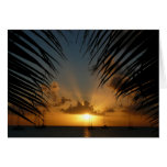 Sunset Through Palm Fronds Card