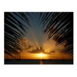 Sunset Through Palm Fronds Postcard