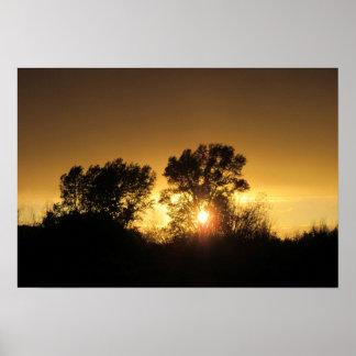 Sunset through Rabbitbrush (chico) Poster