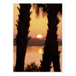 Sunset Through the Palm Trees Post Cards