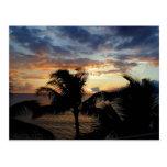 Sunset Through The Palms Postcard