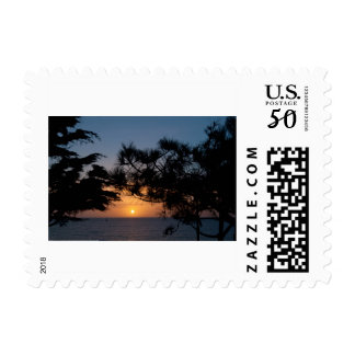 Sunset Through the Trees Postage