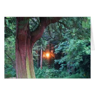 Sunset Through Trees Card