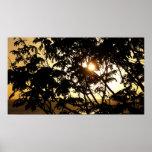 Sunset Through Trees I Print