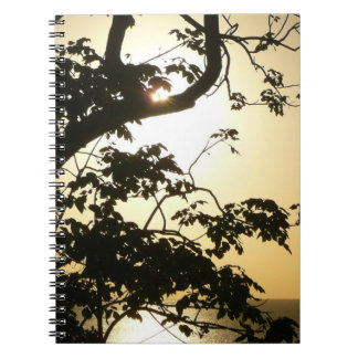 Sunset Through Trees I Tropical Photography Notebook