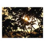 Sunset Through Trees I Tropical Photography Photo Print