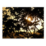 Sunset Through Trees I Tropical Photography Postcard