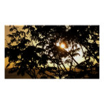 Sunset Through Trees I Tropical Photography Poster