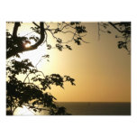 Sunset Through Trees II Tropical Photography Photo Print