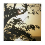 Sunset Through Trees II Tropical Photography Tile