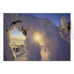 Sunset thru the Snowghosts at Big Mountain near Cards