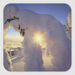 Sunset thru the Snowghosts at Big Mountain near Sticker