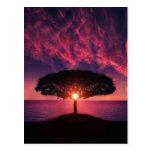 Sunset Tree Postcard
