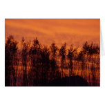 Sunset-Trees on Fire Cards