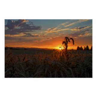 Sunset & Wheat Posters