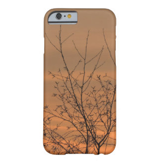 Sunset whit tree branches, colorful sky barely there iPhone 6 case
