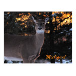 Sunset Whitetail Post Card
