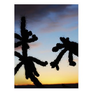 Sunset with Cactus - Blue Postcard