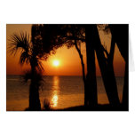 Sunset with Palms, 109 Cards