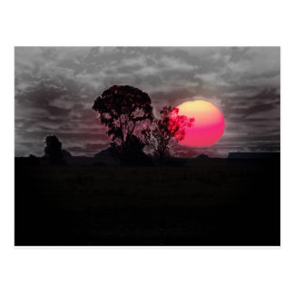 Sunset With Tree Postcard