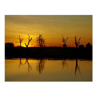 Sunset, Yellow Water Billabong 2 Postcard