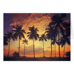 Sunsetpalm Greeting Cards