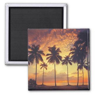 Sunsetpalm Magnet