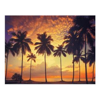 Sunsetpalm Tarjeta Postal