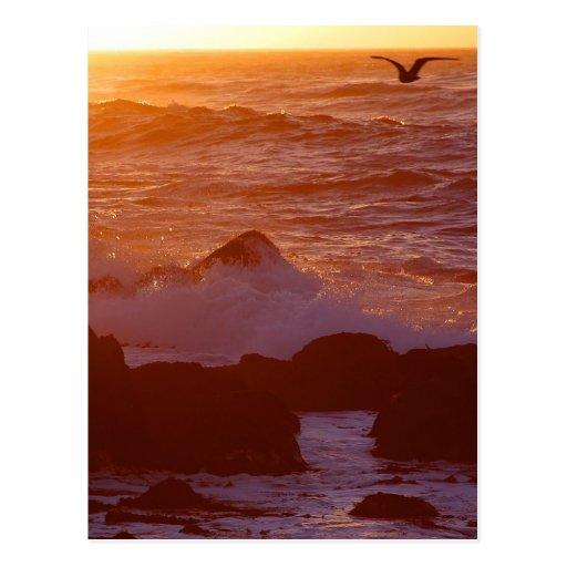 Sunsets Ocean Postcards