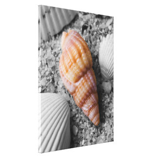 Sunset's Shell Canvas Prints
