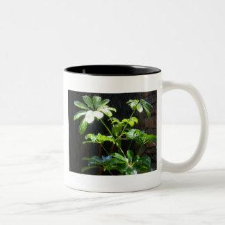 Sunshine and Showers gran canaria Two-Tone Coffee Mug