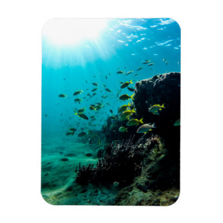 Sunshine and Tropical Fish Magnet