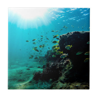 Sunshine and Tropical Fish Tile